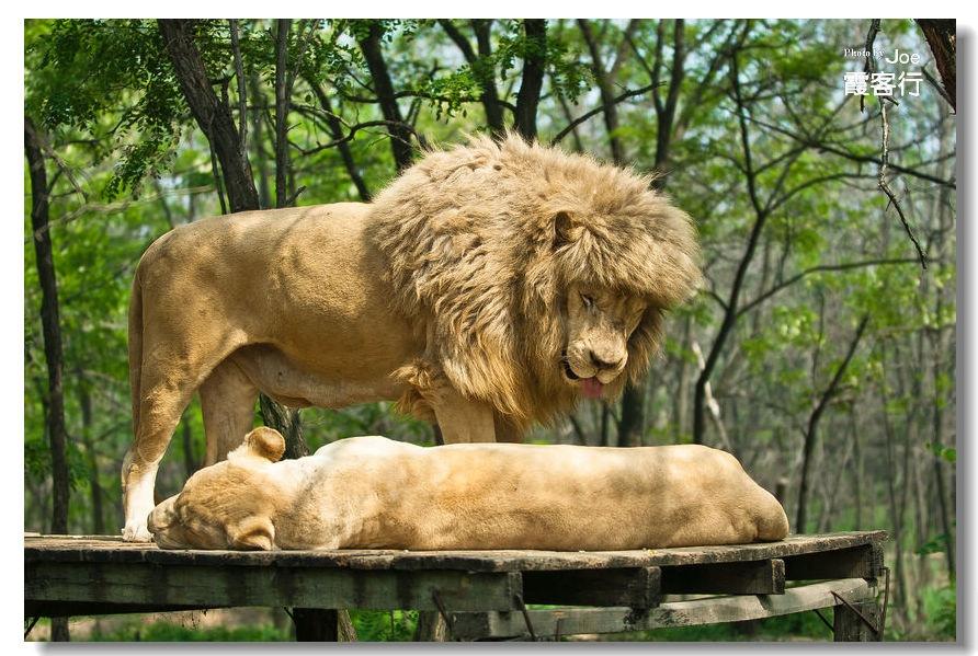 与野生动物的亲密接触——【秦皇岛野生动物园】
