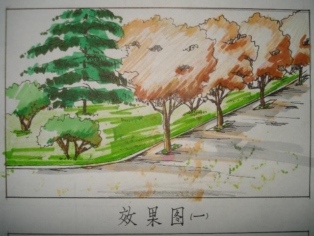植物配置和手绘练习