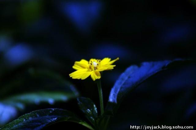 花世界 花名 花语 花的回忆