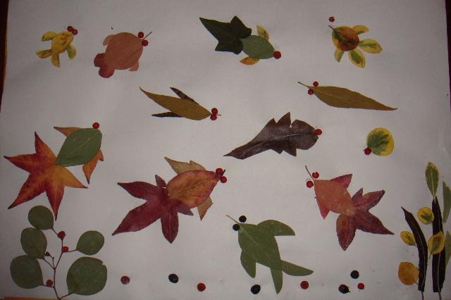 树叶的形状变化很多,有卵形