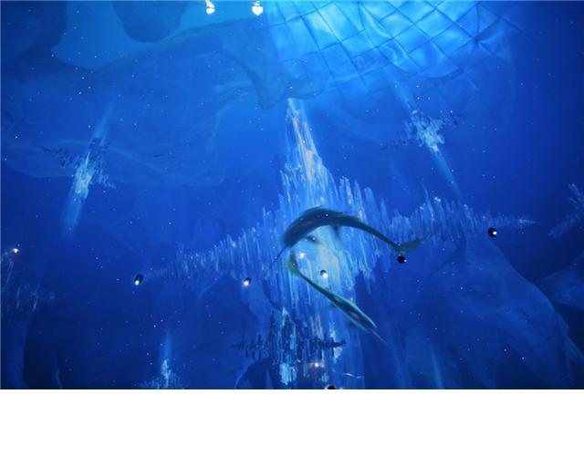 壁纸 海底 海底世界 海洋馆 水族馆 桌面 640_512