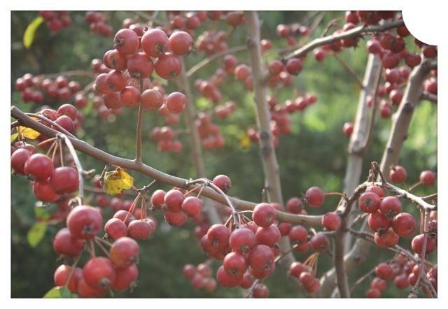 秋天果实种子粘贴画